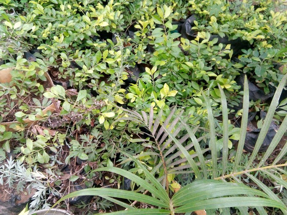 Plantas durante