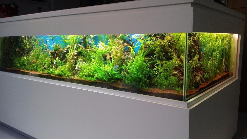 Construim la comandă acvariu marin și de apă dulce,la orice dimensiune