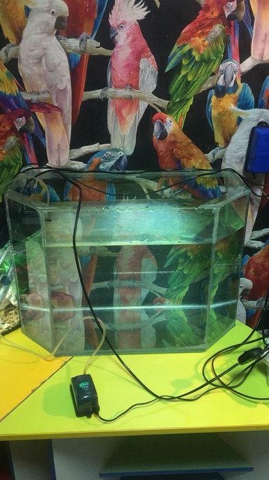 Акция!Обслуживание аквариумов