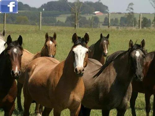 Vendo 6 cavalos