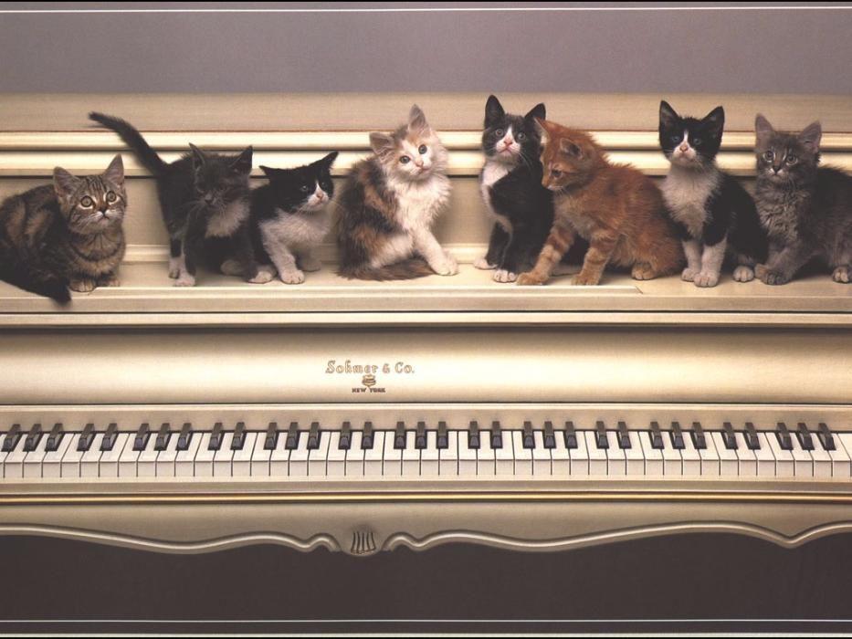 Котятушки в хорошие руки, много окрасов !