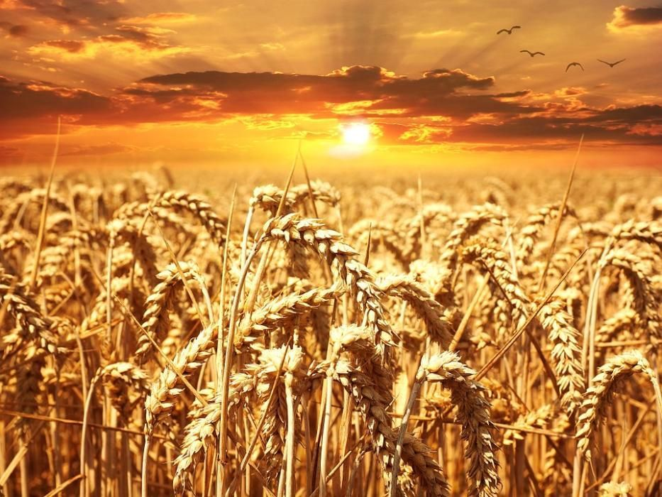 Комбикорм,отруби,ячмень,пшеница,овес,отходы. Отгрузка с Костаная