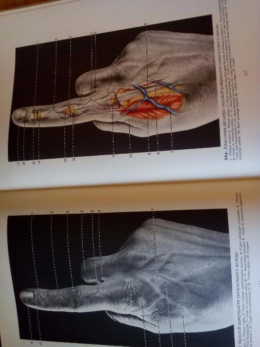 "Цветен атлас ""Релефная анатомия человека"""
