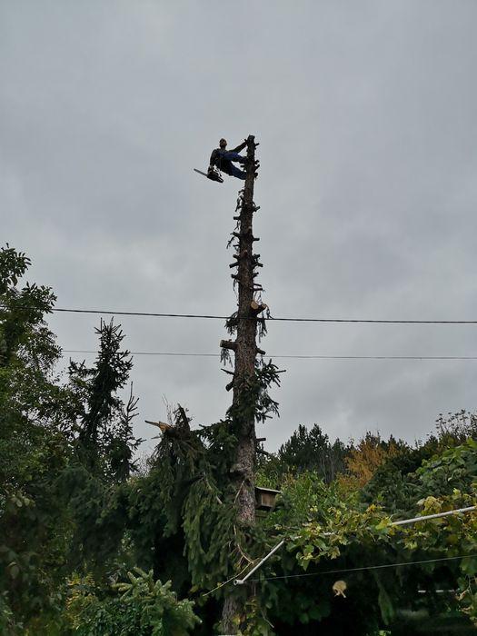 Рязане на опасни дървета, услуги от алпинисти
