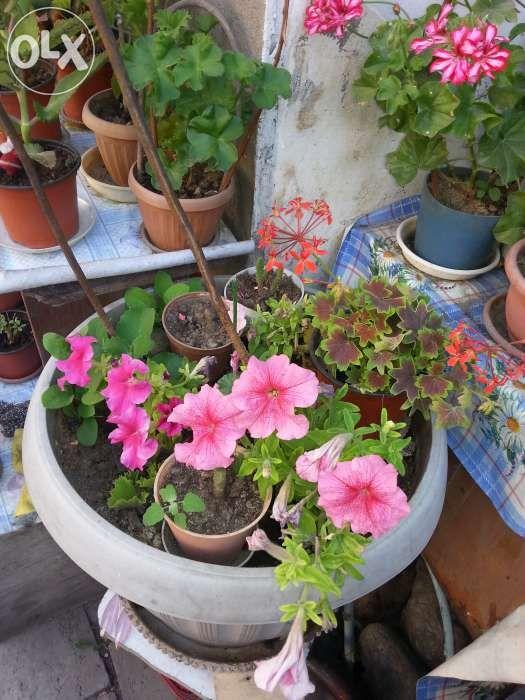 Продам большие и маленькие цветы