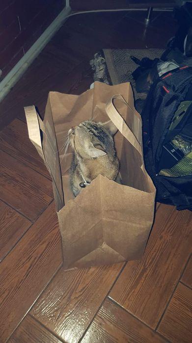Pensiune pentru pisicute