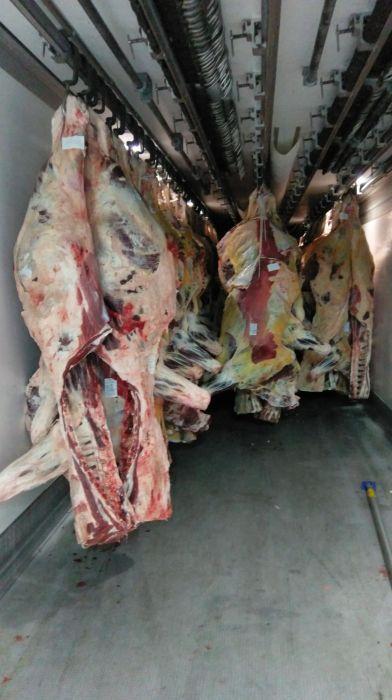 Carcasa vita bovina adultă vaca ,Miel,oaie de calitatea Botosani - imagine 5