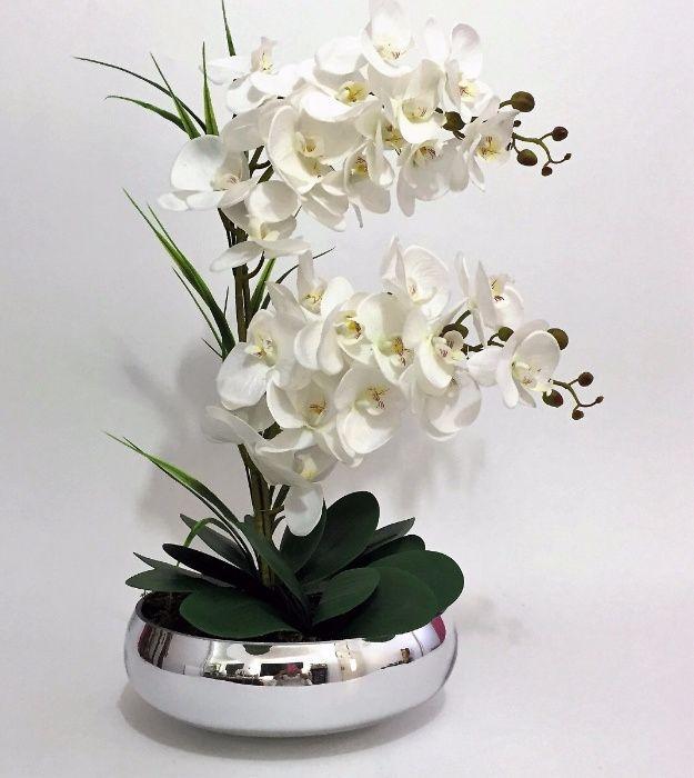 Orquídeas em maputo