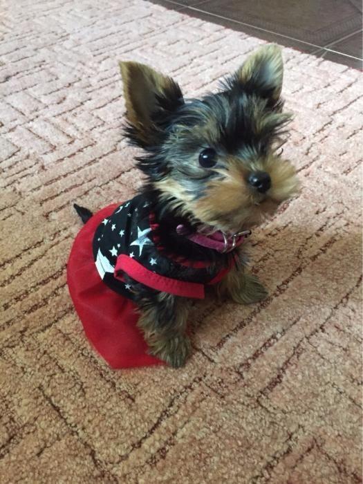 Платье со звездами д/собак