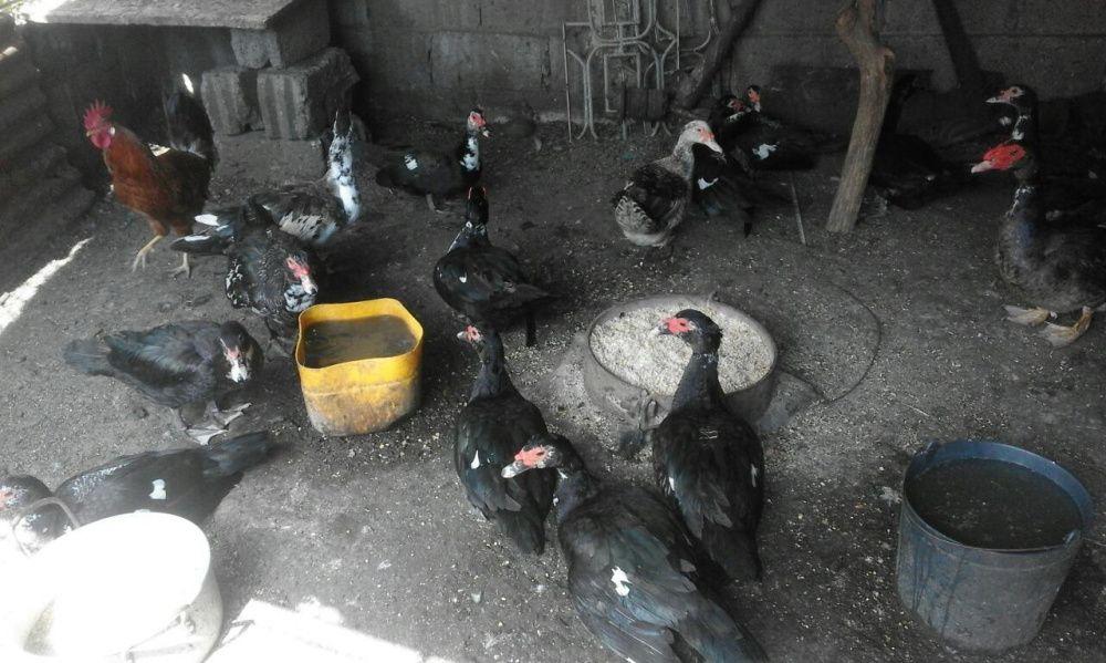 Patos Bairro do Jardim - imagem 2