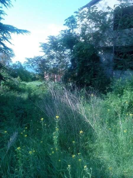 Почистване на дворове парцели,косене на трева.Рязане на дървета.