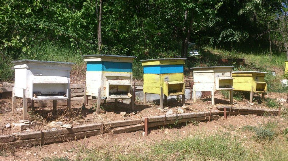 Кошери с пчели Дадан-Блат
