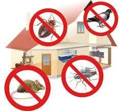 Controle de Pragas em sua casa