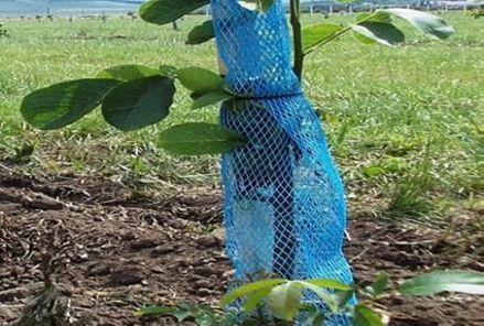 Plasa Anti rozatoare/plasa protectie pomi/