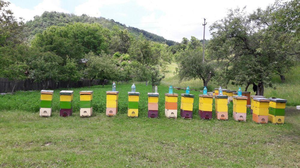 Vand familii albine pe 20 Rame.