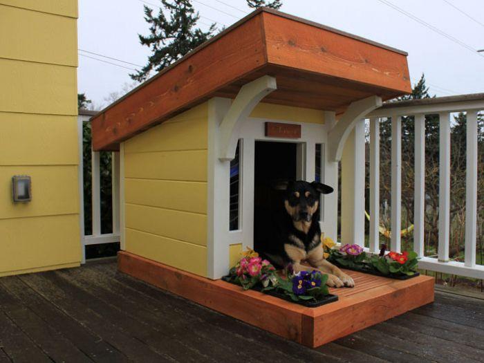 Faz-se casa para cães