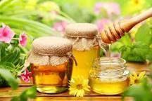 мед катонский