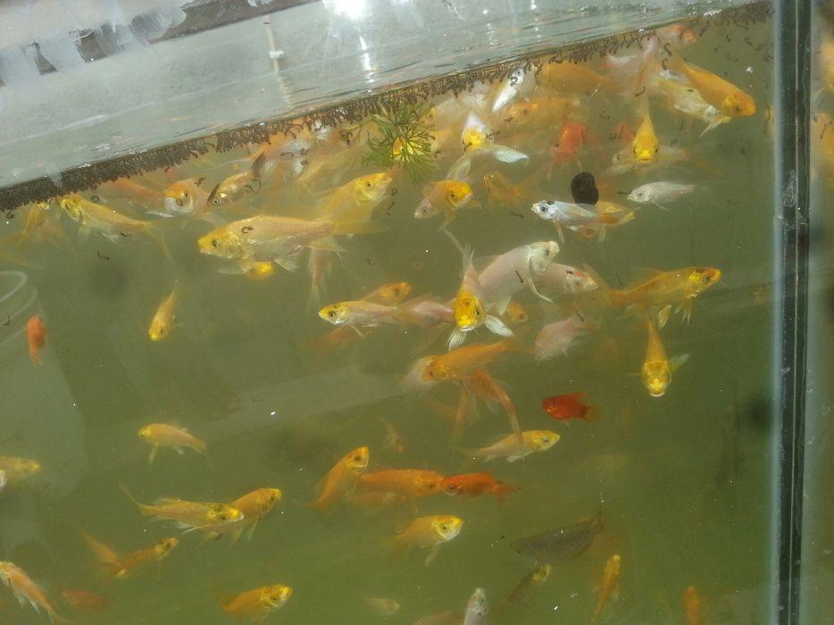 Venda de peixes ornamentais a bom preço liga