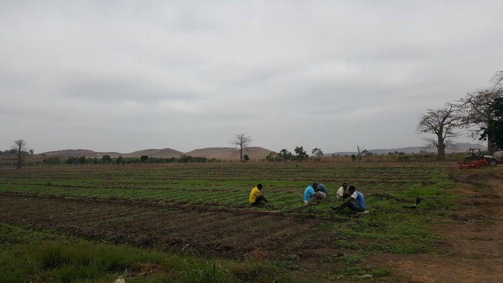 Vende-se esta fazenda no Bengo com mais de 30 hectares a bom preço apr