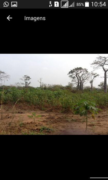 Investe na Agricultura/50 Hectares no Bengo/Caxito