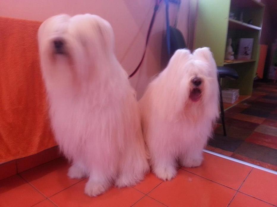 Salon canin Timisoara Timisoara - imagine 4
