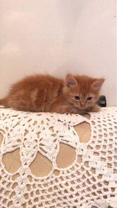 Lindo Gato