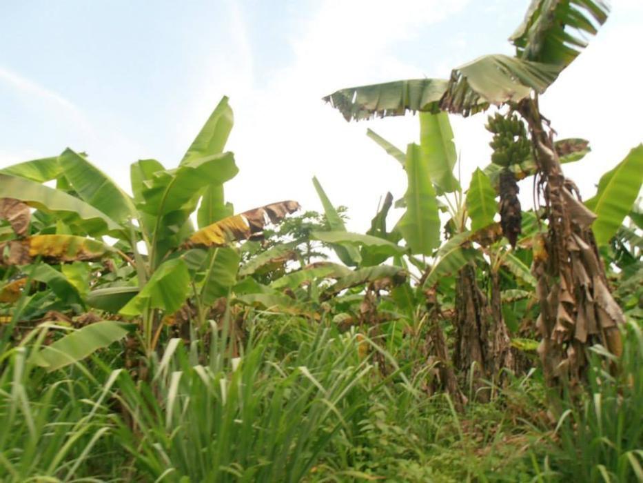 vende se uma fazenda de 1.598 hectares na província do BENGO