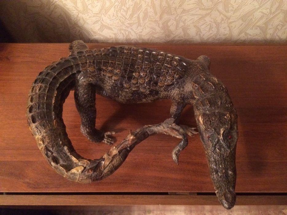Продам чучело крокодила привезённого из Судана!