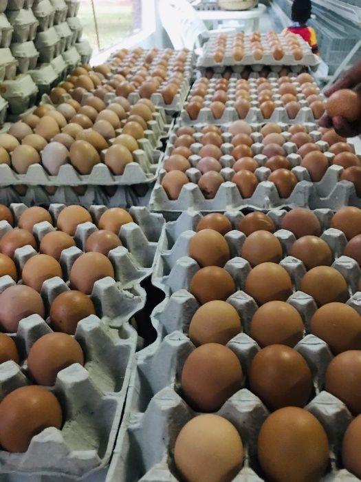 Ovos frescos à venda **Super Promoção**