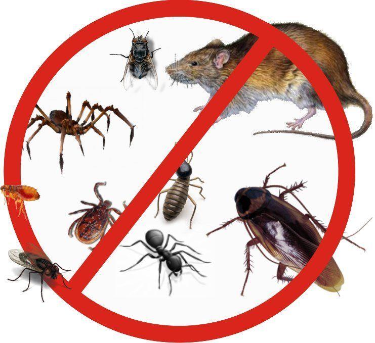 DESINFESTAÇÃO,EM PROMOÇÃO Para combater,Baratas,Ratos,