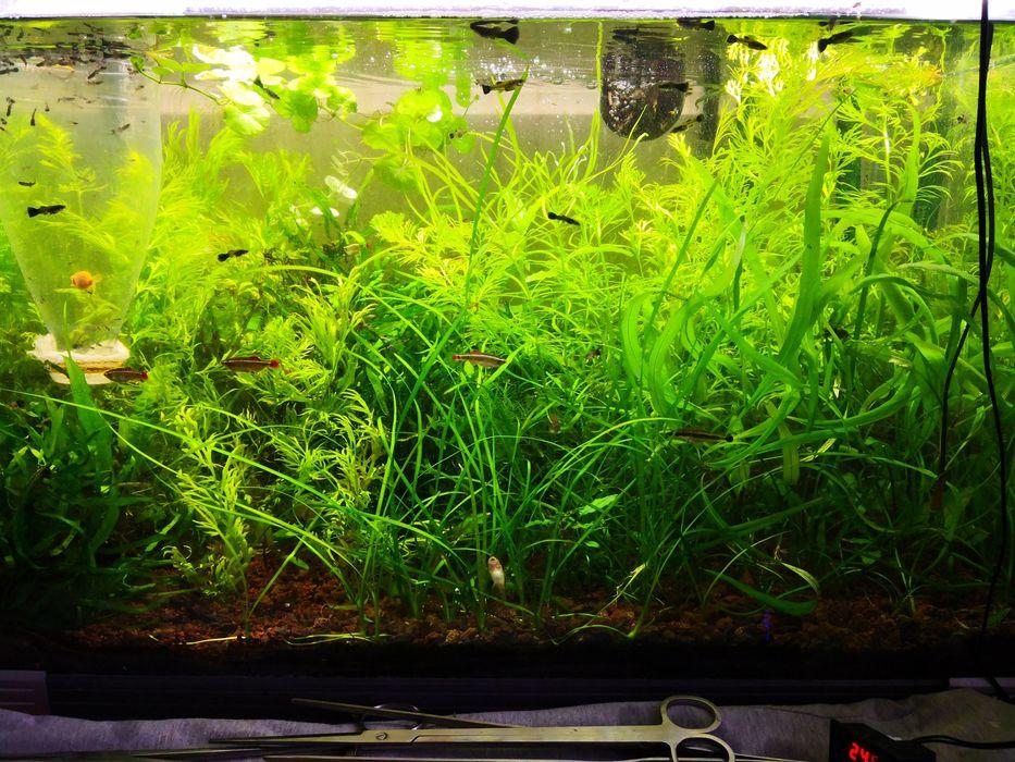 Plante easy acvariu