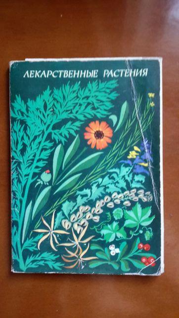 открытки лекарственные растения 1987