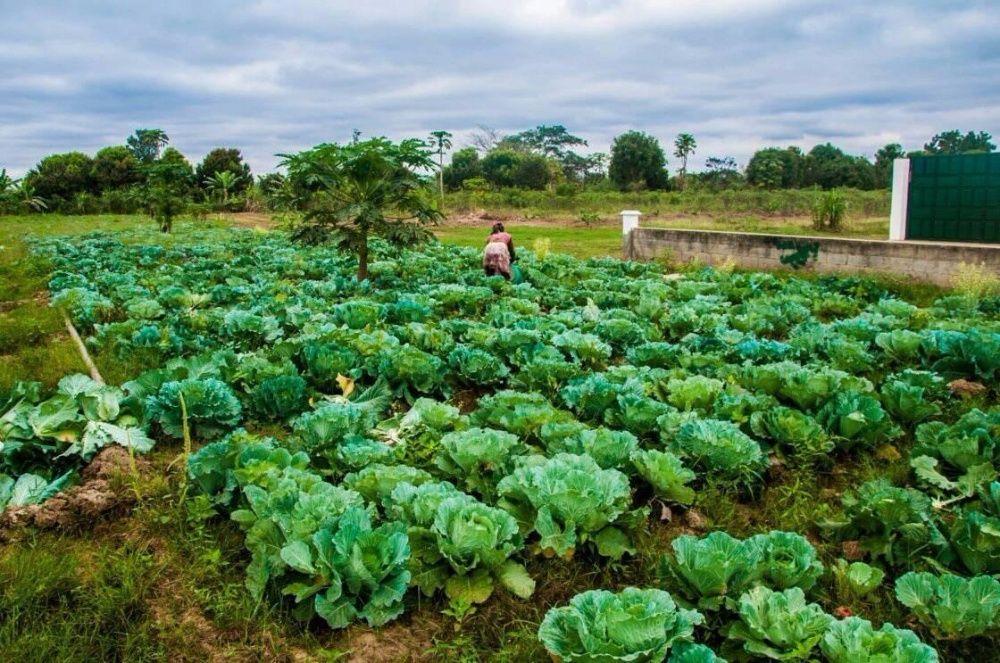 Vende-se Fazenda de 300 hectares em pleno funcionamento no BENGO