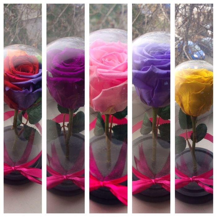 Trandafiri criogenati conservati rezistenti in timp cu o viata lunga