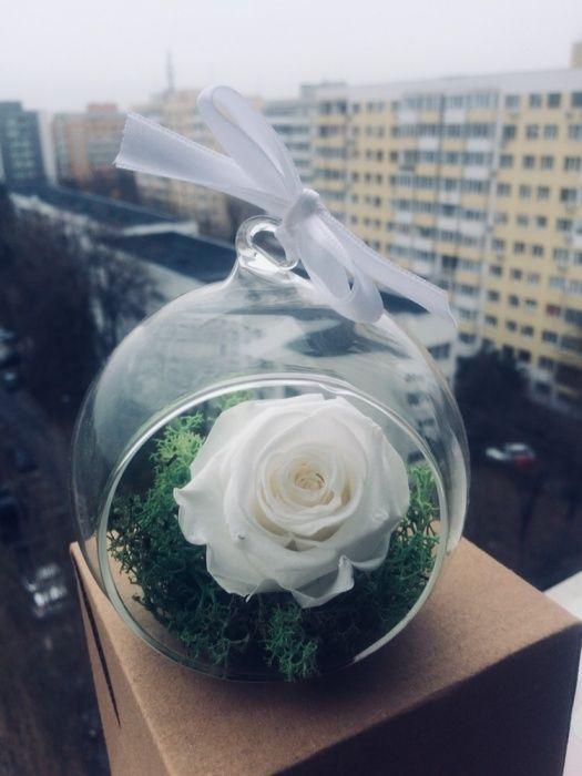 Trandafir criogenat alb in glob de sticla