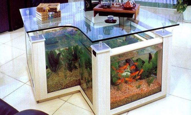 Aquários para criação de peixes e decoração de ambientes
