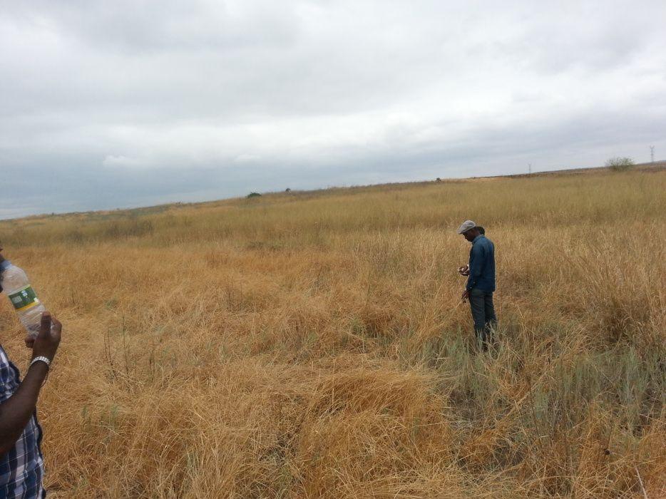 Vende se este terreno 5 hectares no bom Jesus