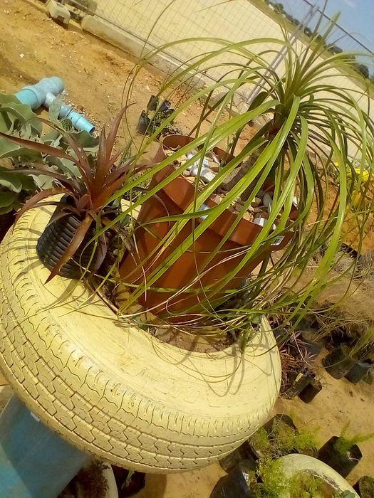 Plantas avenda