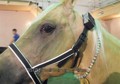 Gps трекер маяк для коней и лошадей gpsmarker ADM50