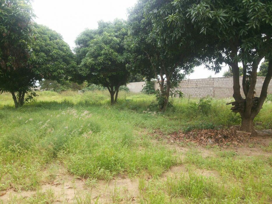 Terreno parcelado em Tsalala