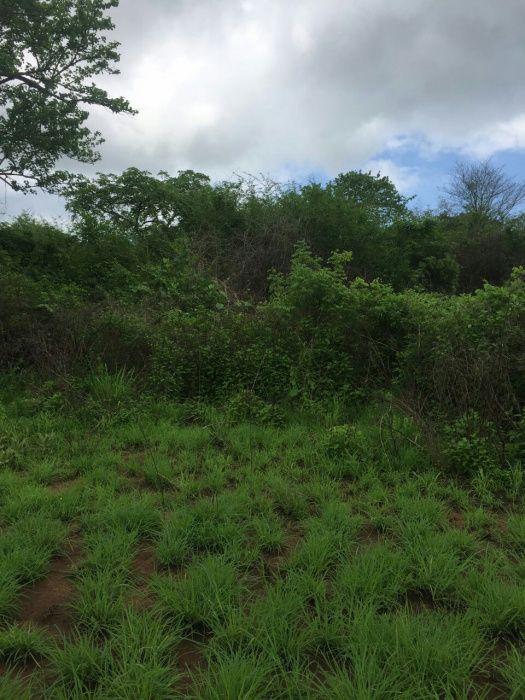 vendemos 100 hctr de terra na provicia do bengo com todos documento