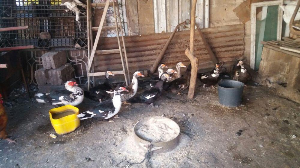 Patos Bairro do Jardim - imagem 1