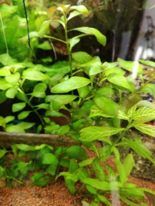 Пакет аквариумни растения