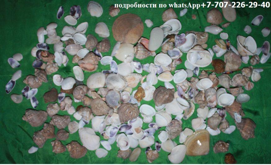 морские ракушки и фильтр