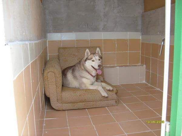 Хотел за кучета гр. София - image 2