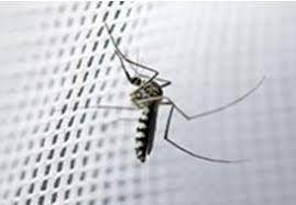 Plase anti-insecte, plase tip rulou, plase tantari, pervaze int/ext.