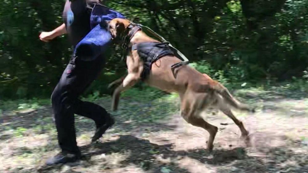 """Дрессировка собак. Дрессировочная площадка """"Alfa_dog_training_Almaty"""""""