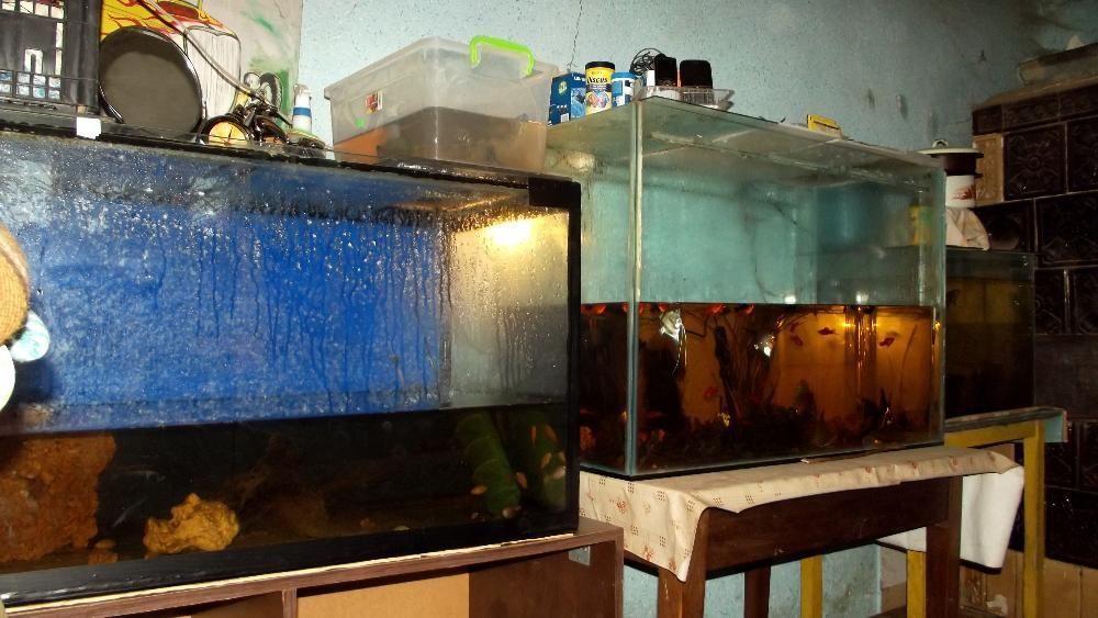 2 acvarii 300 litri