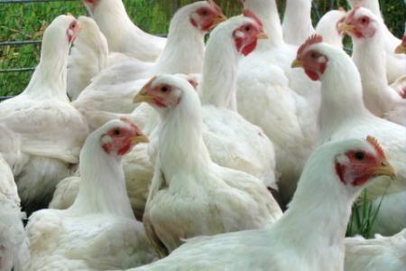 """Комбикорм Фирмы """"АЛ и КС"""" ПК-6 для цыплят бройлеров от 30 дней"""