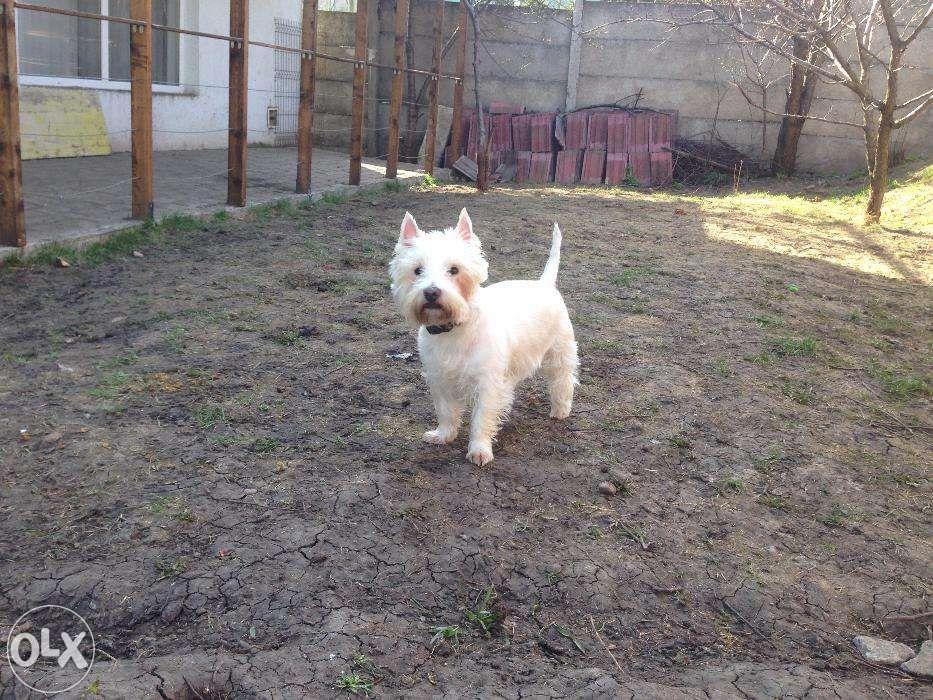 FamilyVet 24 - Pensiune pentru animale de companie in Cluj-Napoca